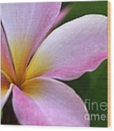 Pop Of Pink Plumeria Wood Print