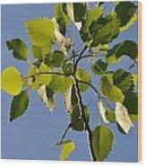 Poplar Leaves Wood Print