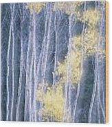 Poplar Trees In Autumn, Grey Creek Wood Print