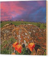 Poppies And Clouds Wood Print