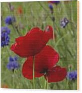 Poppies And Cornflowers Wood Print