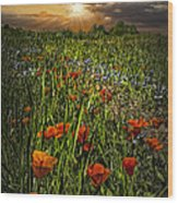 Poppies Art Wood Print