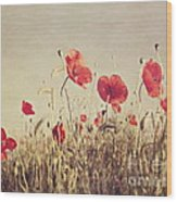 Poppies Wood Print by Diana Kraleva
