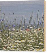 Poppies Et Al V Wood Print