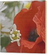 Close Up Of A Poppy With Daisies Wood Print