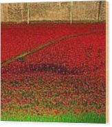 Poppies For The Fallen Wood Print by Andrew Lalchan