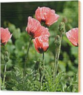 Poppies In My Garden Wood Print