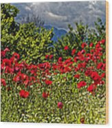 Poppies In Remembrance Wood Print