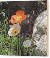 Poppies In The Sun Wood Print