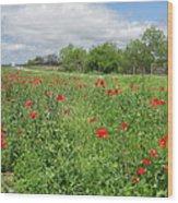 Poppies Near Hondo Wood Print