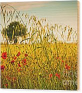 Poppies With Tree In The Distance Wood Print