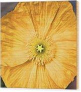 Poppy 25 Wood Print