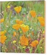 Poppy 36 Wood Print