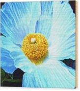 Poppy 8 Wood Print