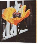 Poppy Art Poster Print Wood Print