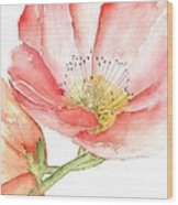Poppy Bloom Wood Print by Sherry Harradence