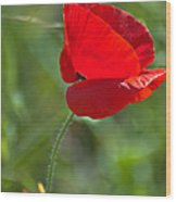 Poppy Blowing In The Wind Wood Print