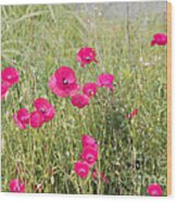 Poppy Blush Wood Print