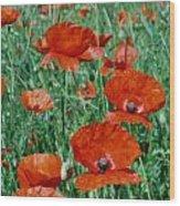 Poppy Field 2 Wood Print