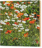 Poppy Fields - Beautiful Field Of Spring Poppy Flowers In Bloom. Wood Print