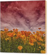 Poppy Fields Forever Wood Print