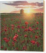 Poppy Fields Of Sweden Wood Print