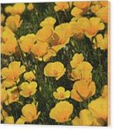 Poppy Fields  Wood Print