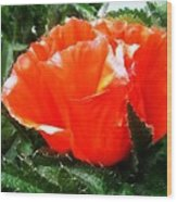 Poppy Flower Wood Print by Heather L Wright