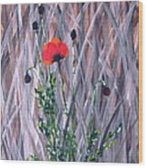 Poppy In The Wild Wood Print