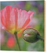 Poppy In Waiting Wood Print