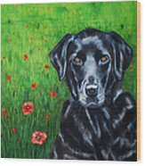 Poppy - Labrador Dog In Poppy Flower Field Wood Print