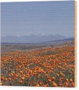 Poppy Land Wood Print