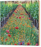 Poppy Lined Vineyard Wood Print
