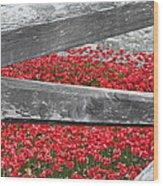 Poppy Memorial Tower Of London Wood Print