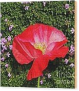 Poppy On Thyme  Wood Print