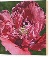 Poppy Pink Wood Print