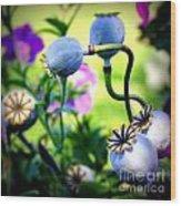 Poppy Pods And Curvy Stems. Wood Print