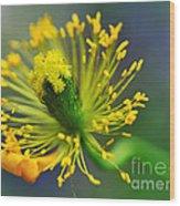 Poppy Seed Capsule 2 Wood Print