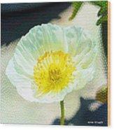 Poppy Series - Beside The Sidewalk Wood Print