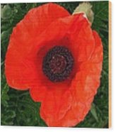 Poppy Of Remembrance  Wood Print