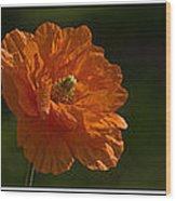 Poppy Triptych Wood Print