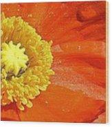 Poppy Up Close Wood Print