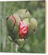 Poppybud Wood Print