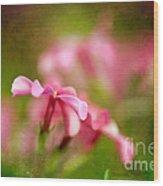 Popsicle Pink Wood Print