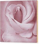 Porcelain Pink Rose Flower Wood Print