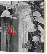 Porch Post Berries Color Punch Wood Print