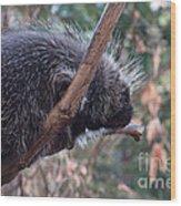 Porcupine Wood Print