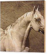 Portait Of A Stallion Wood Print
