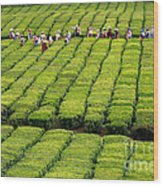 Porto Formoso Tea Gardens Wood Print