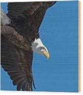 Portrait Of A Bald Eagle Launch Wood Print